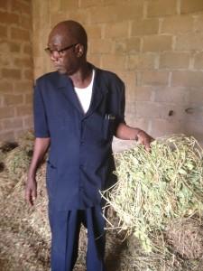 Touré onderzoekt maralfalfa