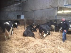 Inspectie droge koeien