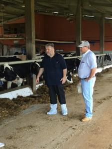 Praten over koeien
